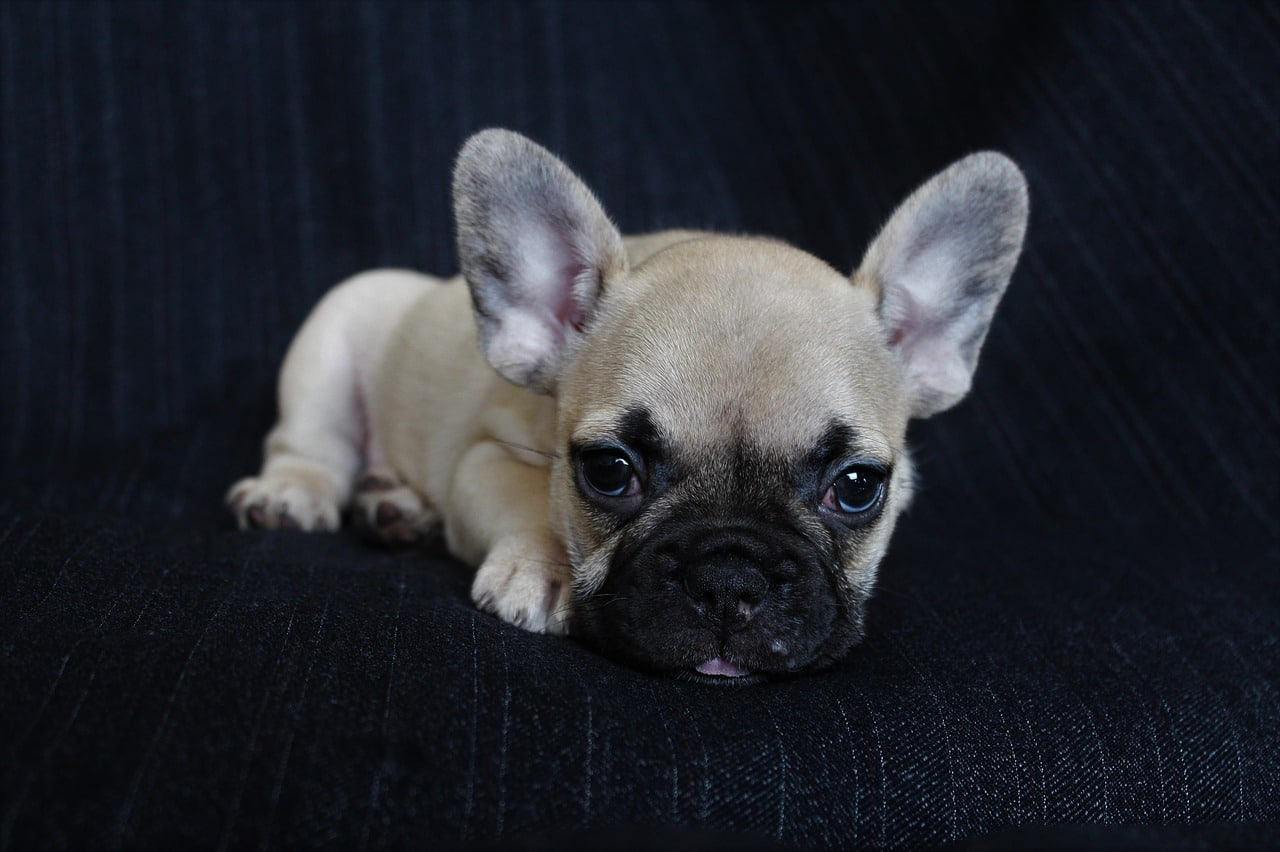 dog, puppy, pet