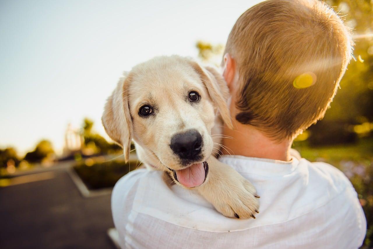 adorable, animal, dog
